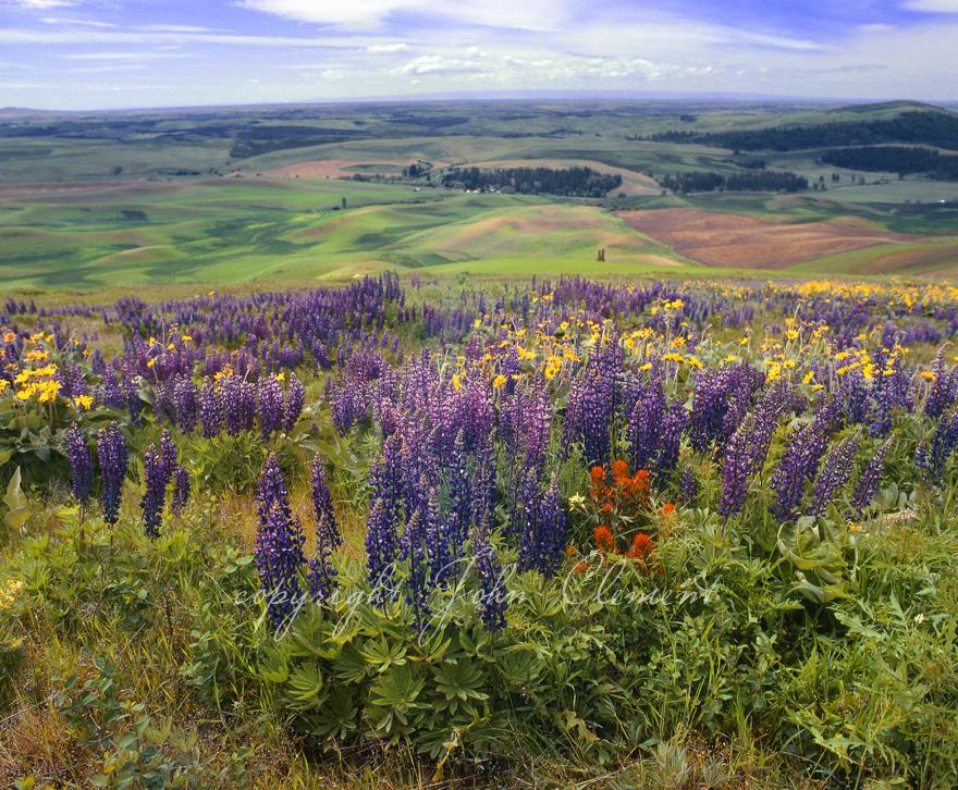 Kamiak Butte Spring