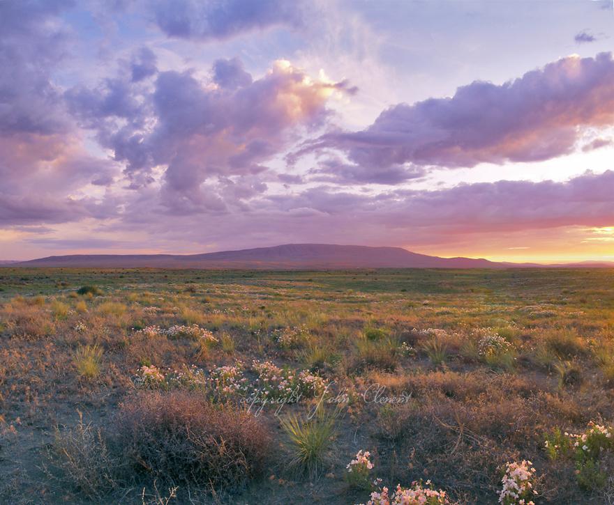 Twilight Spring Rattlesnake Mountain