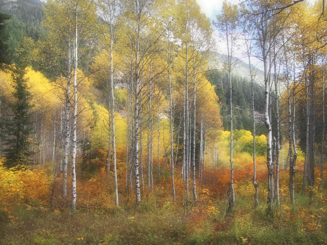 Birch Glen