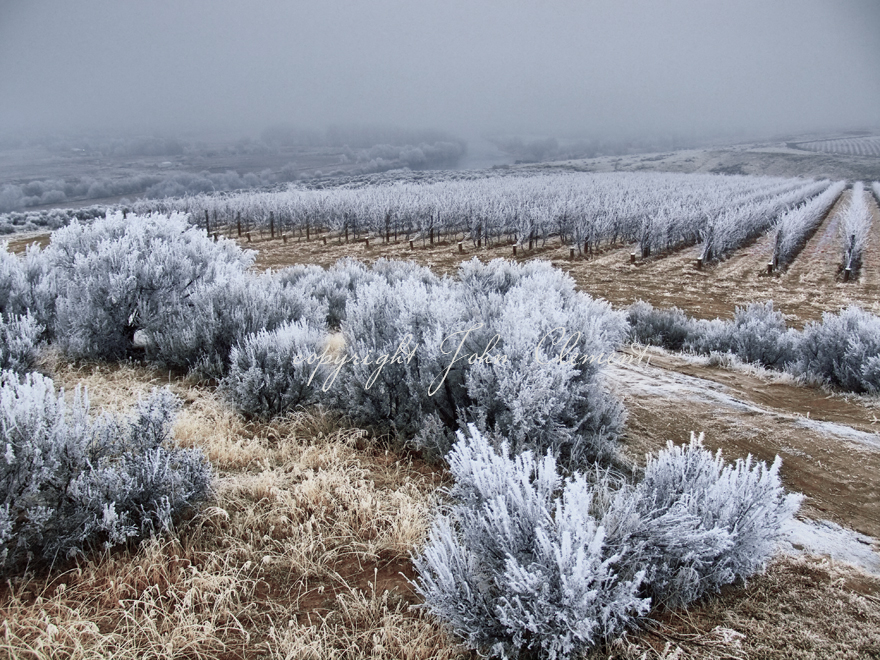 Artz Winter Frost