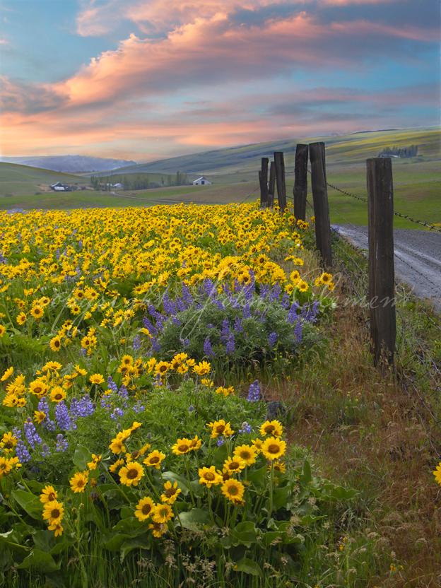 Dalles Mountain Road Twilight