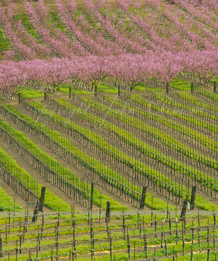 Spring Patterns - Maryhill