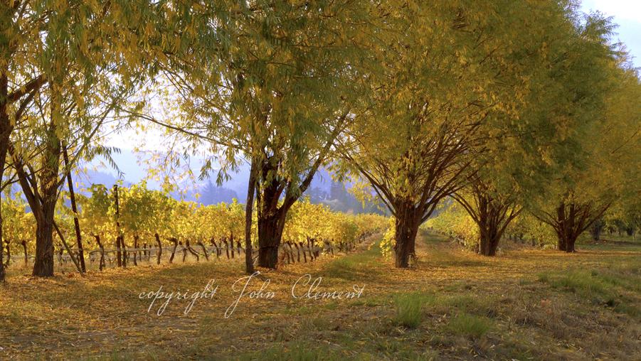 Willow Vines