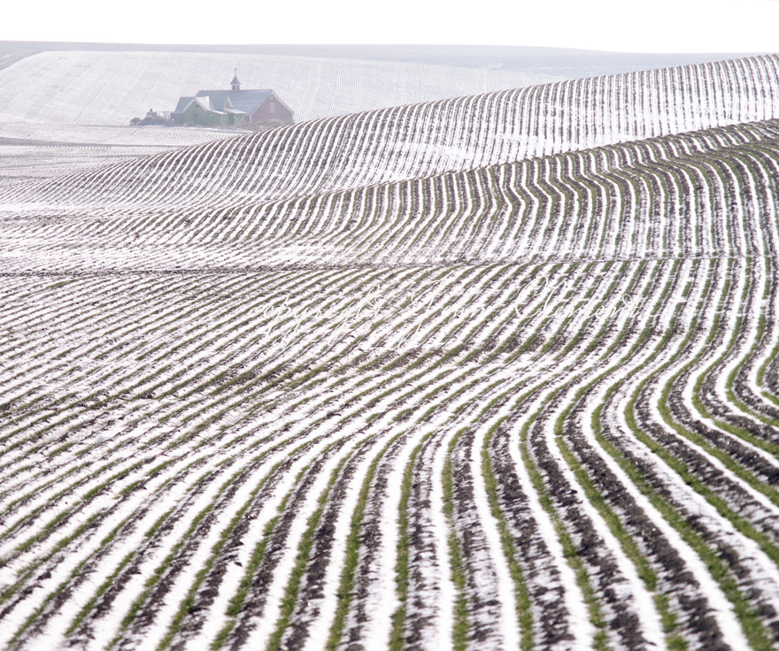 Snowy Furrows