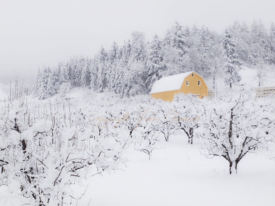 Old Yeller Winter