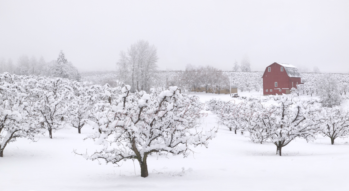 Laraway Winter