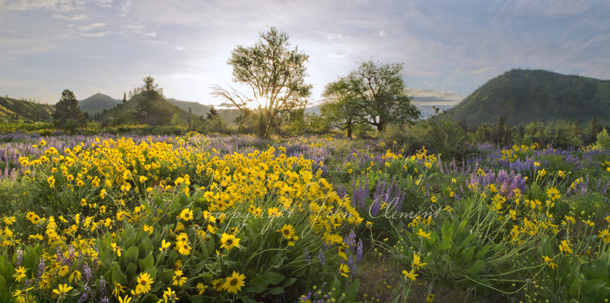 Cashmere Spring