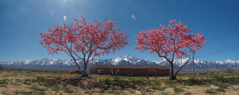 Manzanar Camp CA.