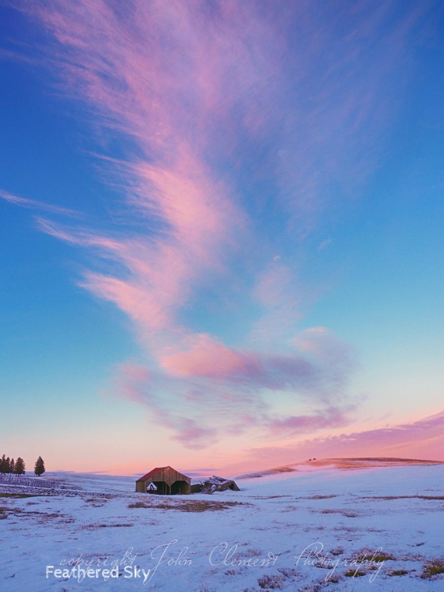 feathered sky.jpg