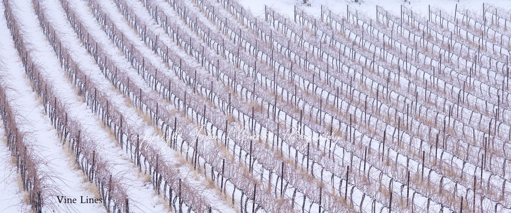 vine patterns2.jpg