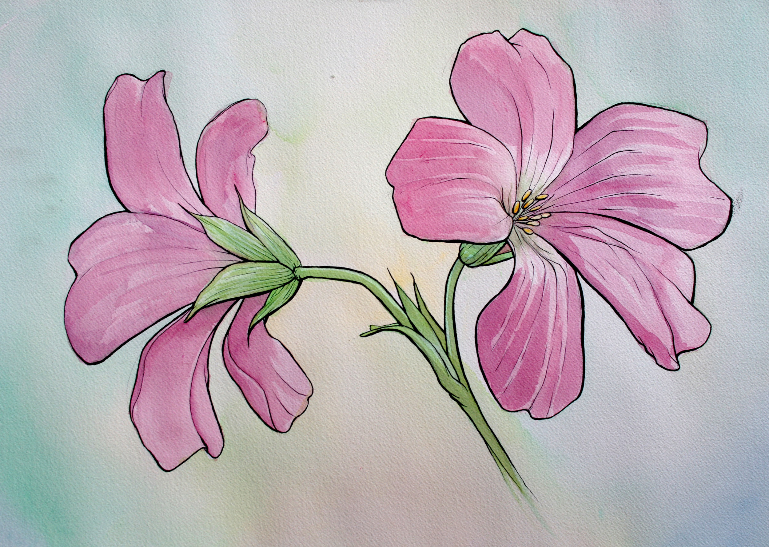 Pink (sold)