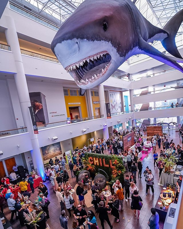 CHILL, it's always shark week at the NAT. Checkout the sweet setup at the The Annual Vendor showcase! What a great event with so many great local vendors.⠀⠀⠀⠀⠀⠀⠀⠀⠀ .⠀⠀⠀⠀⠀⠀⠀⠀⠀ .⠀⠀⠀⠀⠀⠀⠀⠀⠀ .⠀⠀⠀⠀⠀⠀⠀⠀⠀ .⠀⠀⠀⠀⠀⠀⠀⠀⠀ .⠀⠀⠀⠀⠀⠀⠀⠀⠀ .⠀⠀⠀⠀⠀⠀⠀⠀⠀ .⠀⠀⠀⠀⠀⠀⠀⠀⠀ . #sandiegoevents #sandiegoeventplanner #sandiegoevent #sandiegoeventrentals #sandiego #sandiegofundraiser #sdevents #sdeventplanner #sandiegobusiness #americasfinestcity #blacktiecasinoevents #sandiegoeventcoordinator #sandiegoeventscompany #sandiegoweddingplanner #sdweddingplanner #sandiegopartydecor