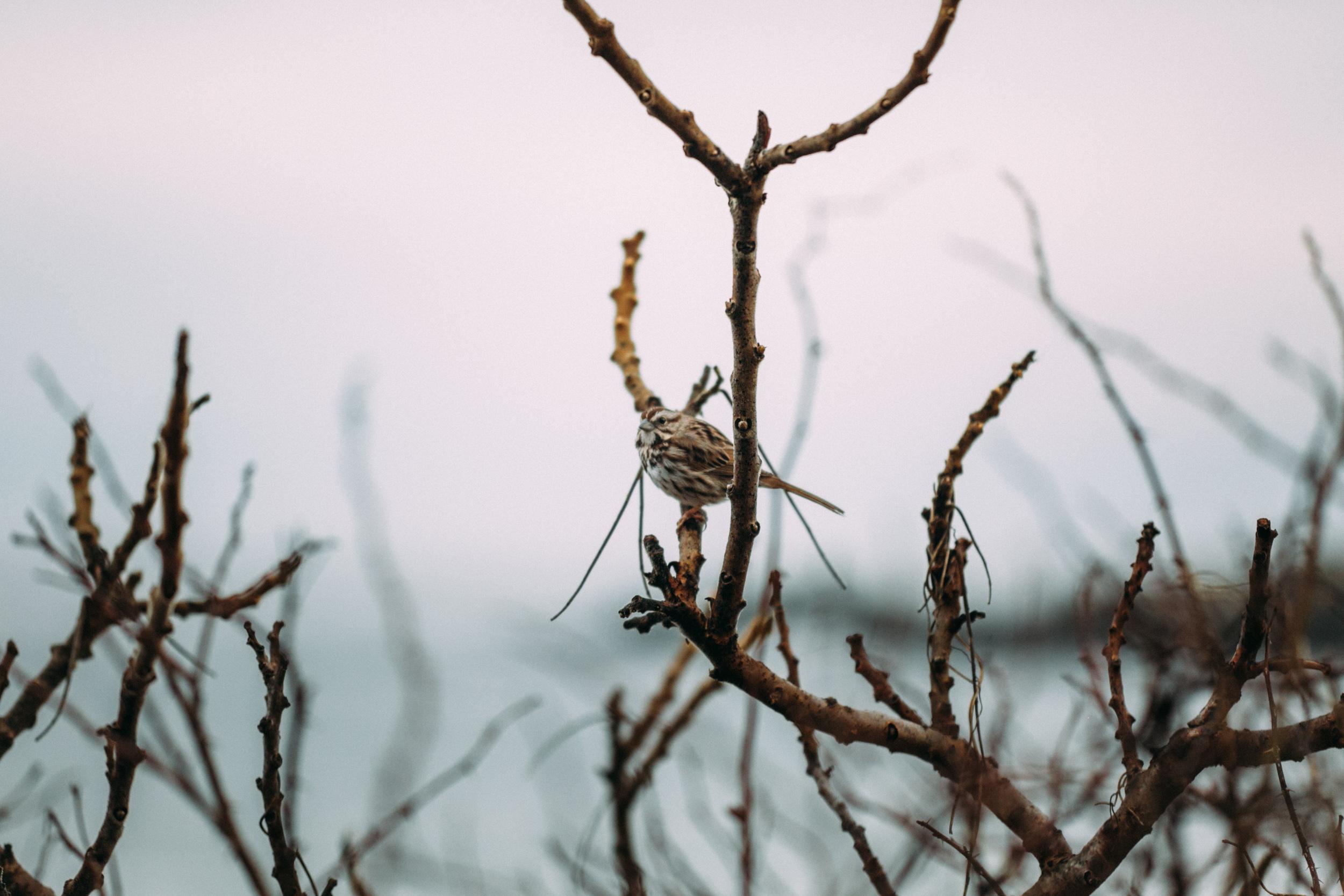 Maine Elopement Photography-10.jpg