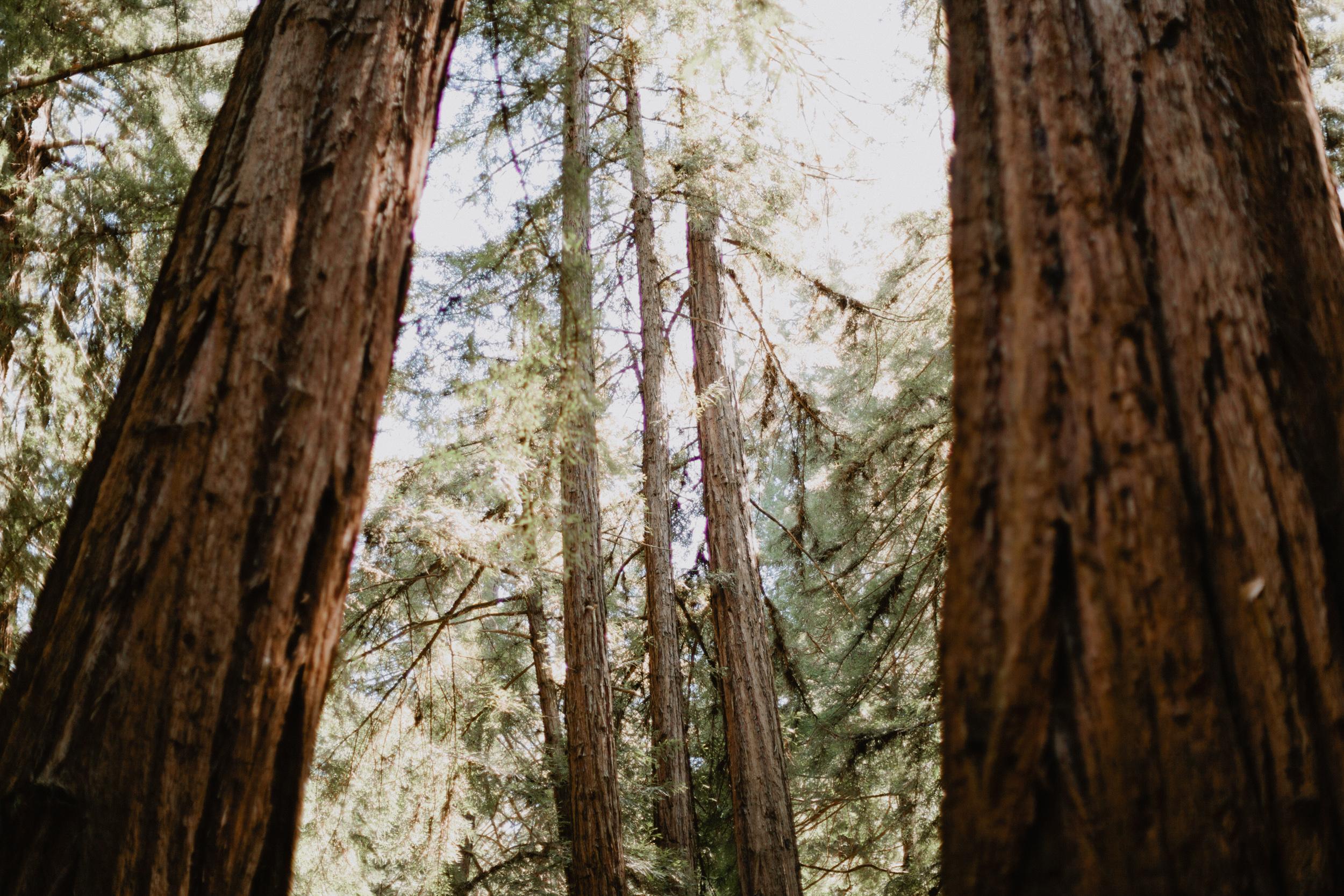 Muir Woods Wedding-51.jpg