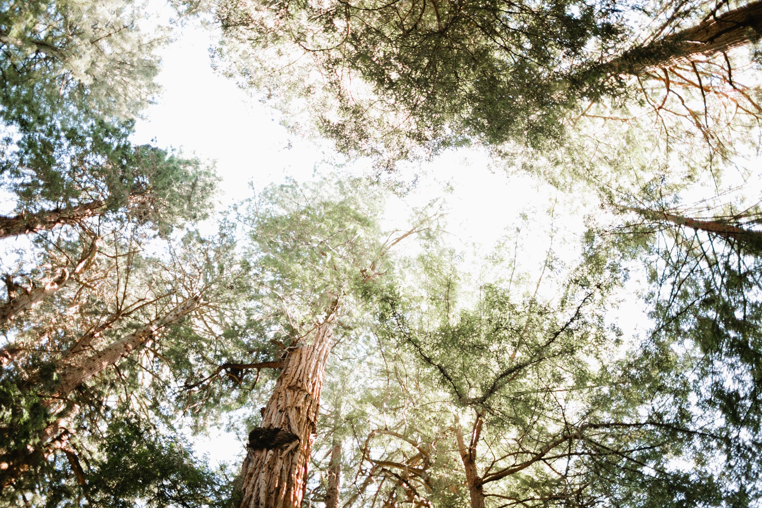 Muir Woods Wedding-53.jpg