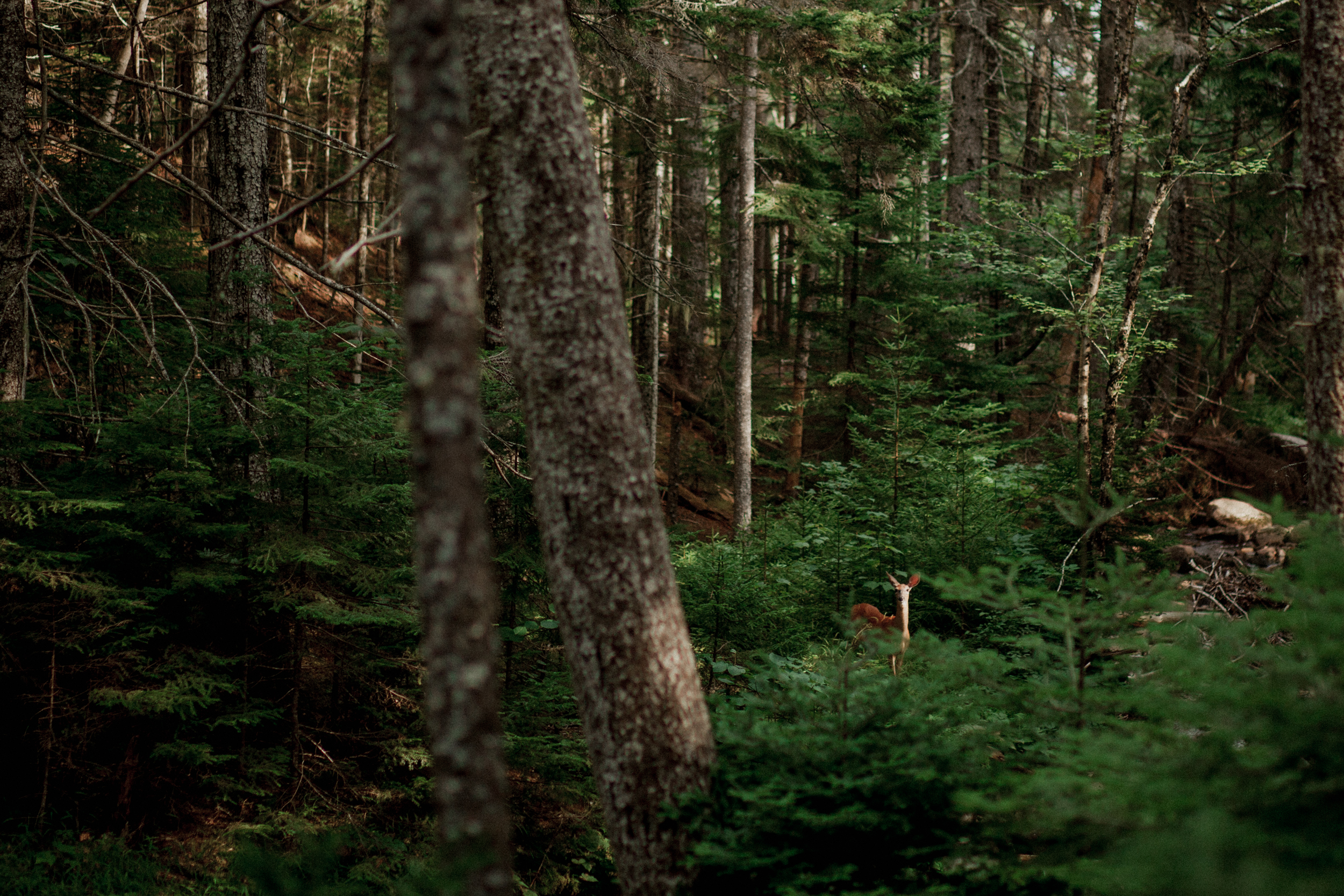 Acadia-Elopement-63.jpg