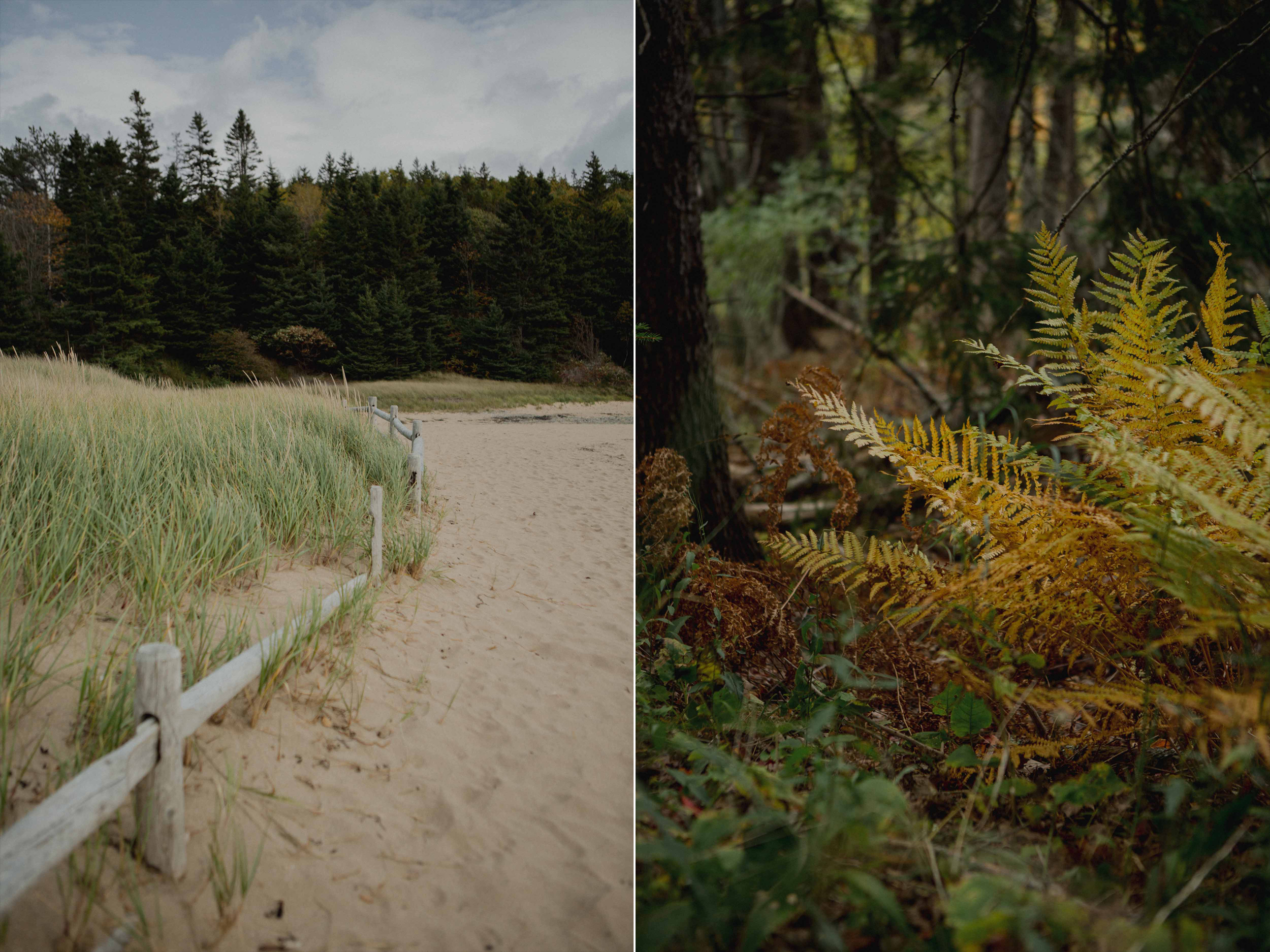 Acadia-National-Park-Elopement1p.jpg