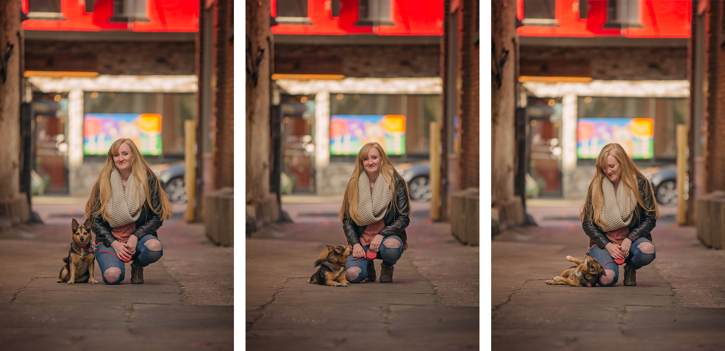 pet-photography-senior-springfield