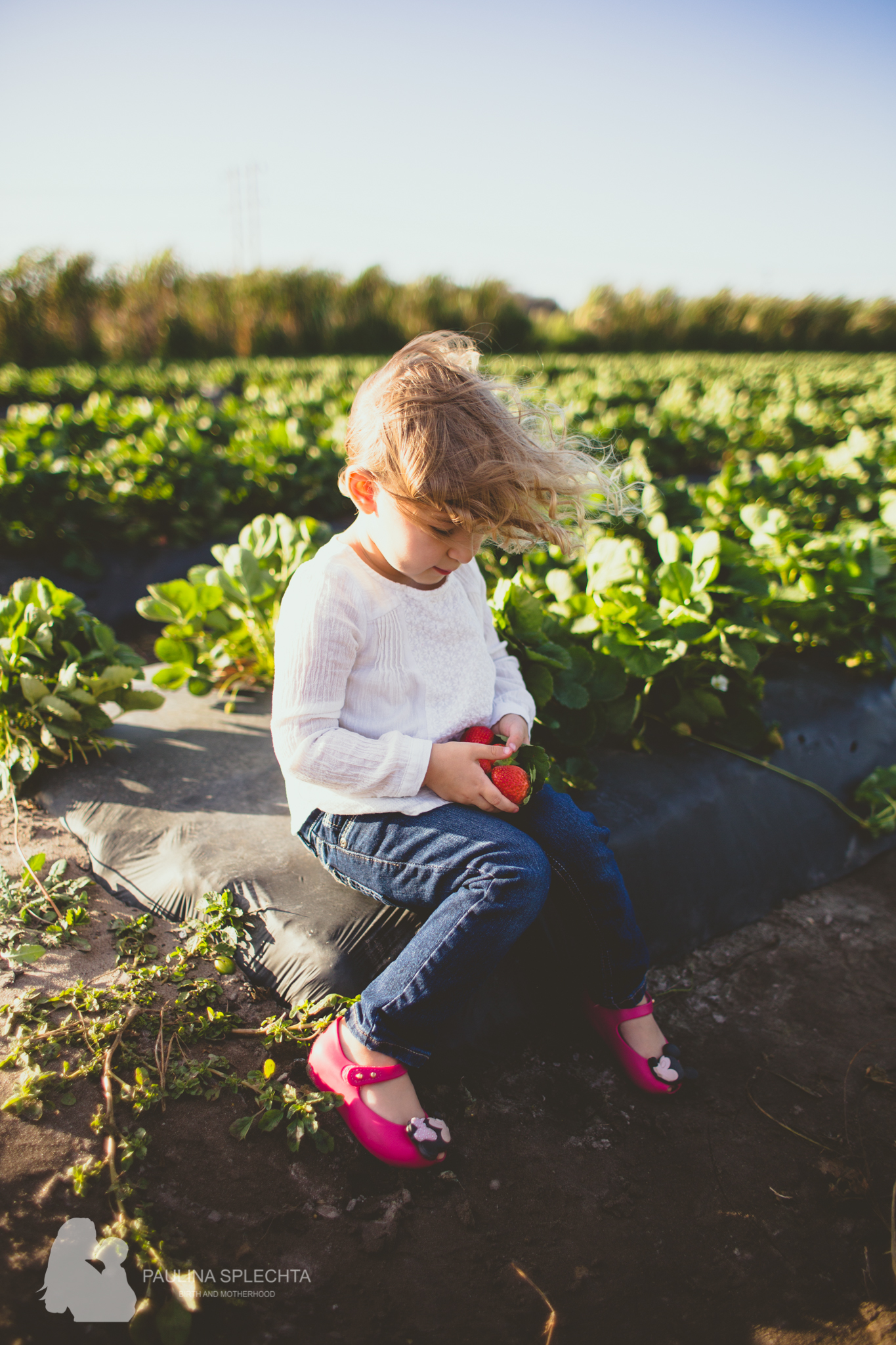 Farm Photo Shoot Strawberry Patch Family Florida-2.jpg