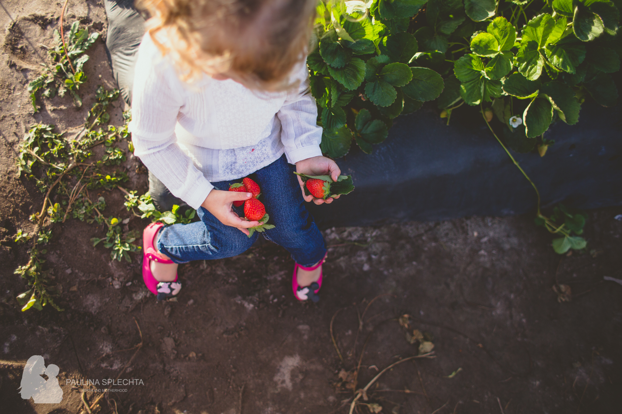 Farm Photo Shoot Strawberry Patch Family Florida-3.jpg