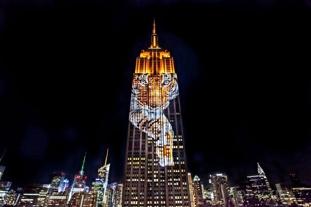 the-welcome-blog-tours-of-new-york-empire-state-building-animals