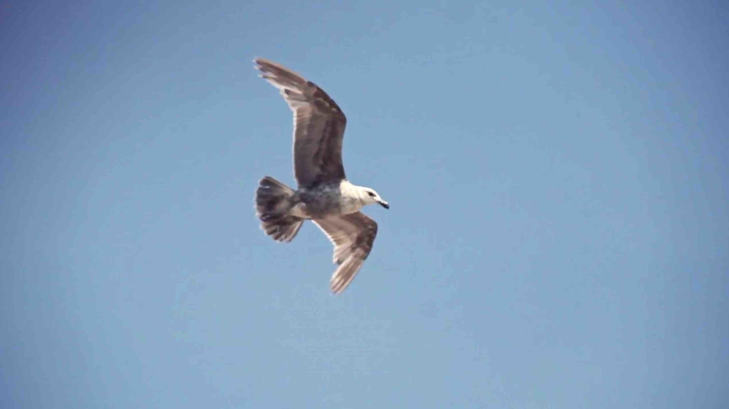 Seagulls are classic symbols of Summer