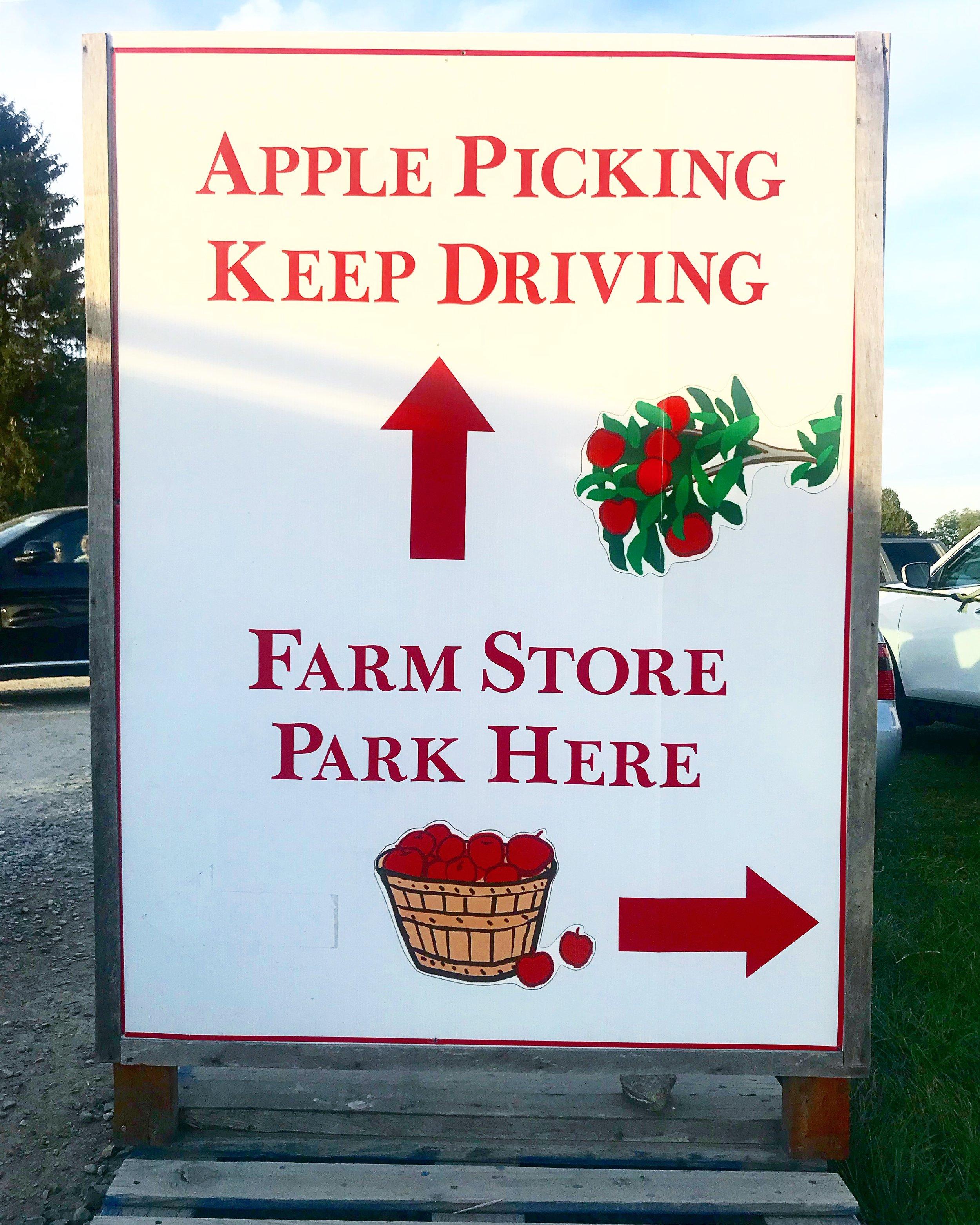 Apple Picking and Farm, Fishkill NY