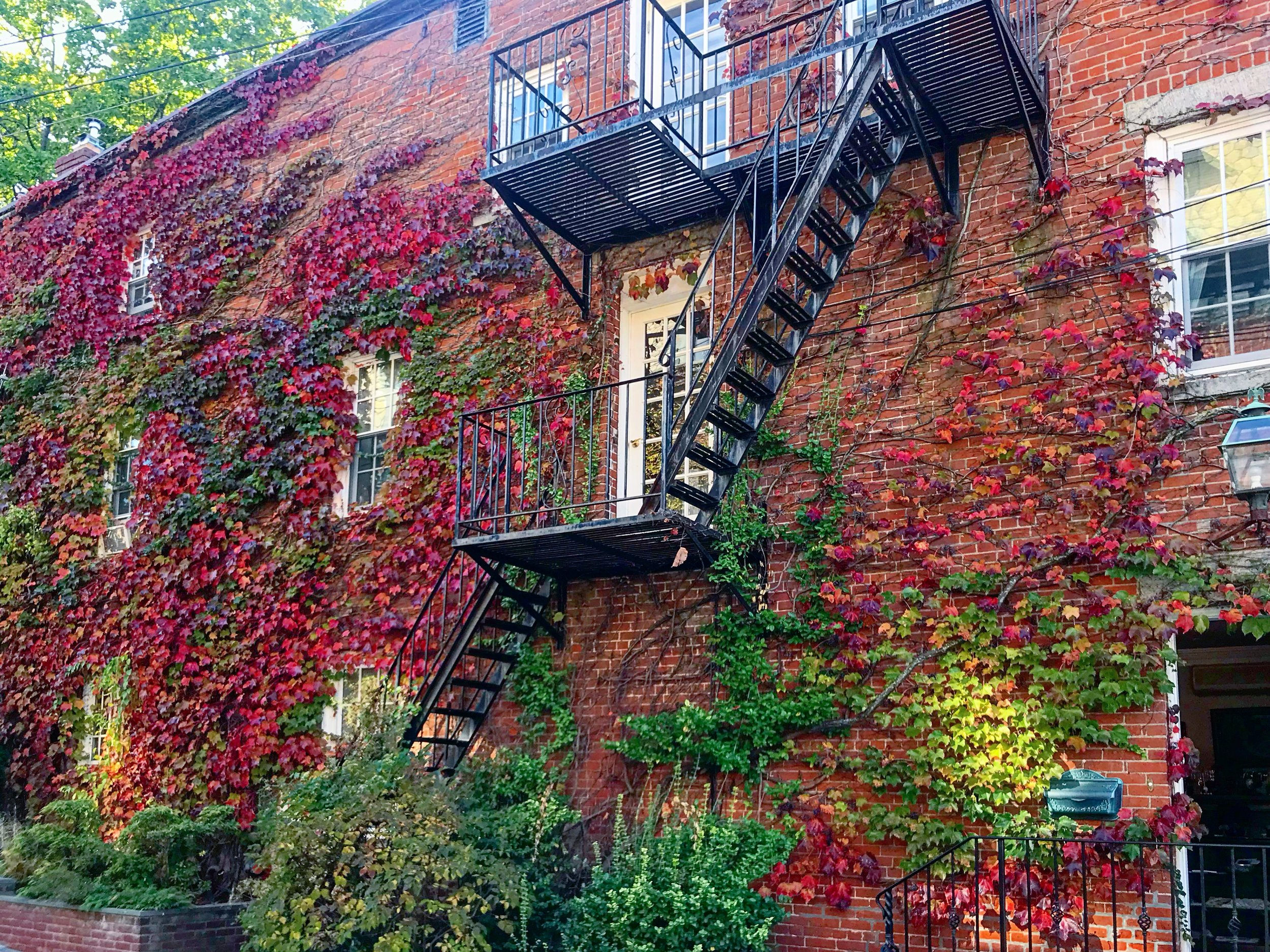 Cold Spring, House with Ivy