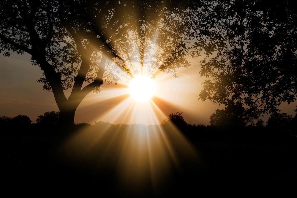 sun dawn homing sky tree.jpg