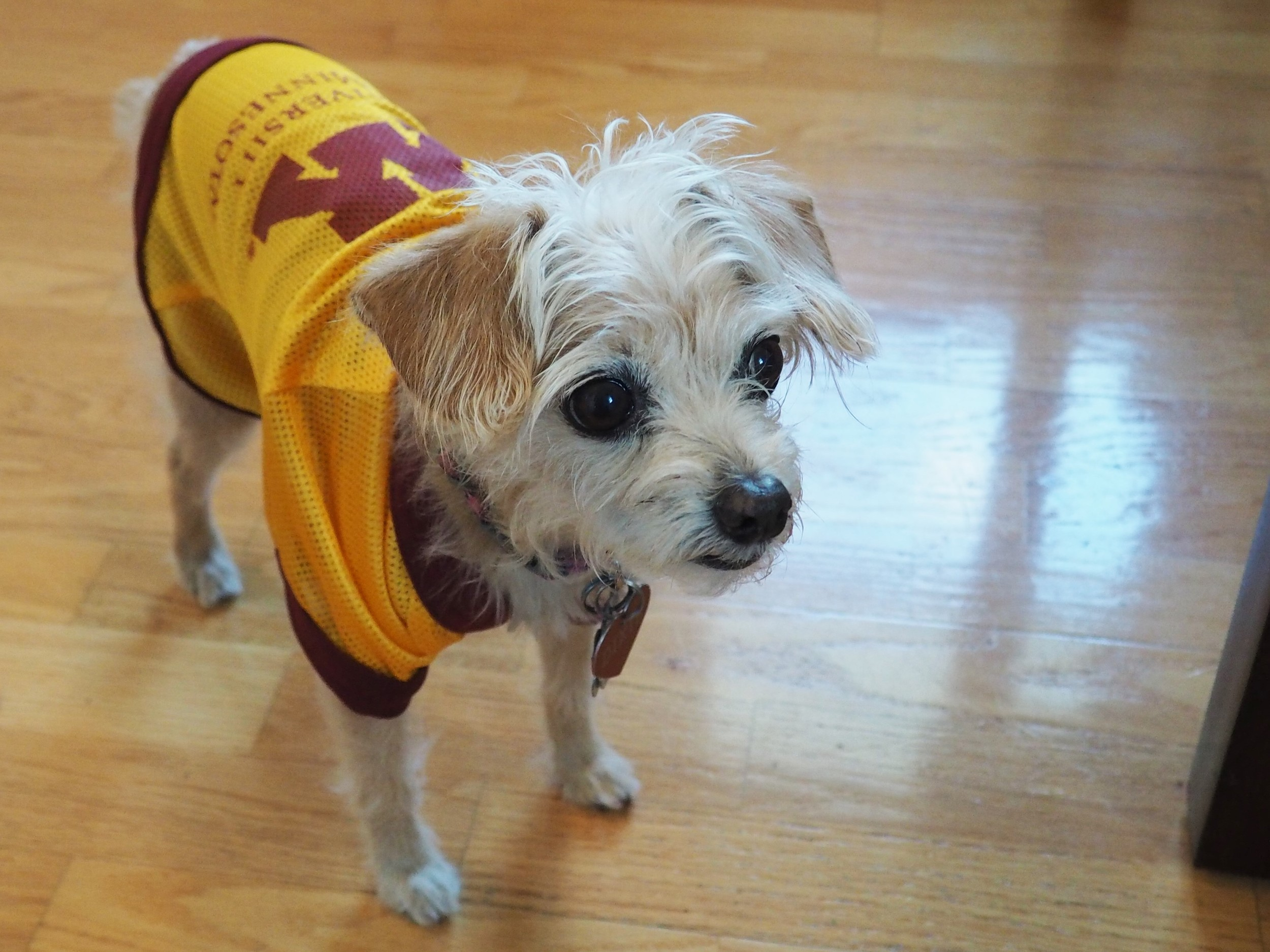 Dixie's Field Trip to the U of MN.jpg