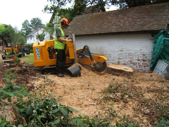 Tree & Stump Removal - When you have to get a tree removed because of disease, damaged, dying, or just right appearance factor. B.E Lawn Service is here to help, get in contact to get a free estimate.