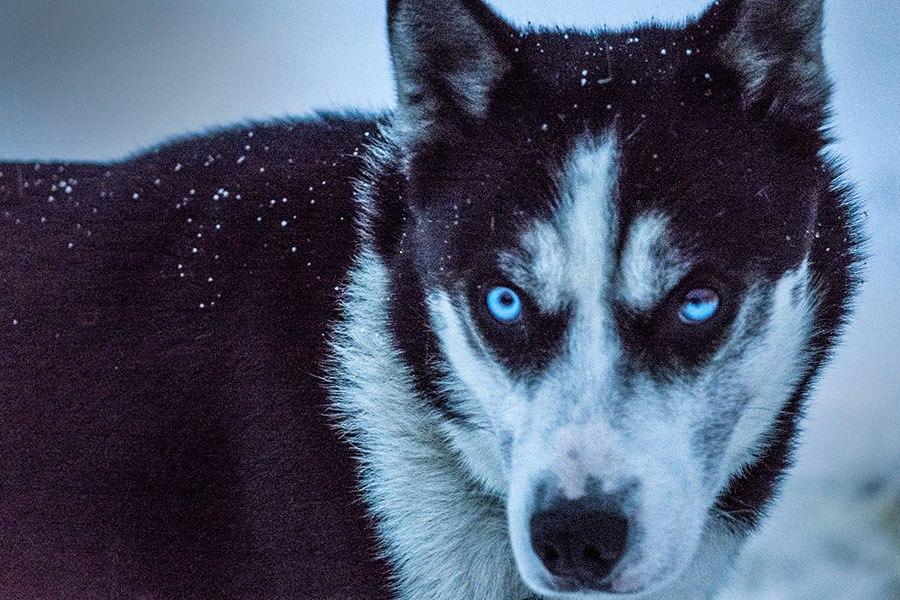 dogpower.jpg