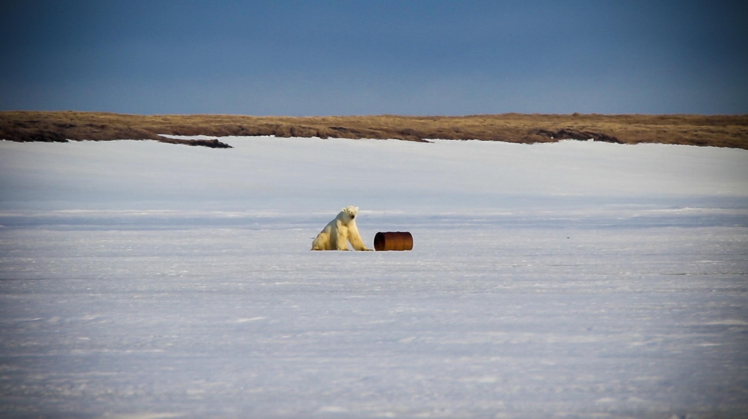 Polar Bear and Oil Barrel_Choose Oil or Environment.jpg