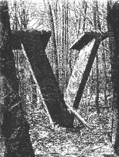 hidden in a forest.....