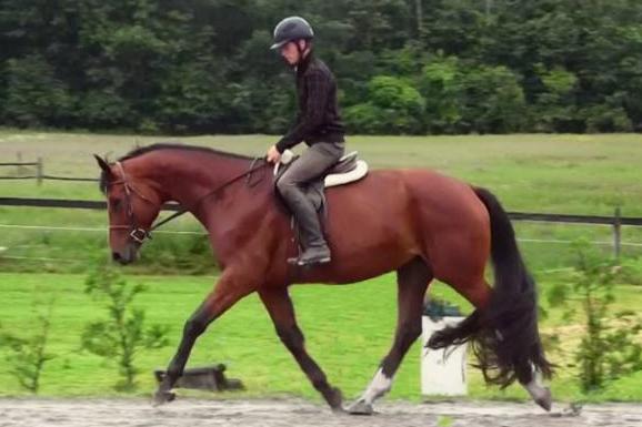 Horse Sale Video