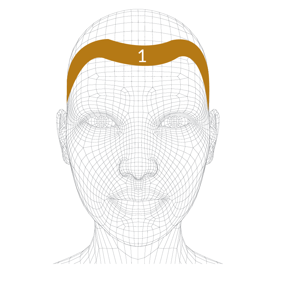 head-forms-01.png