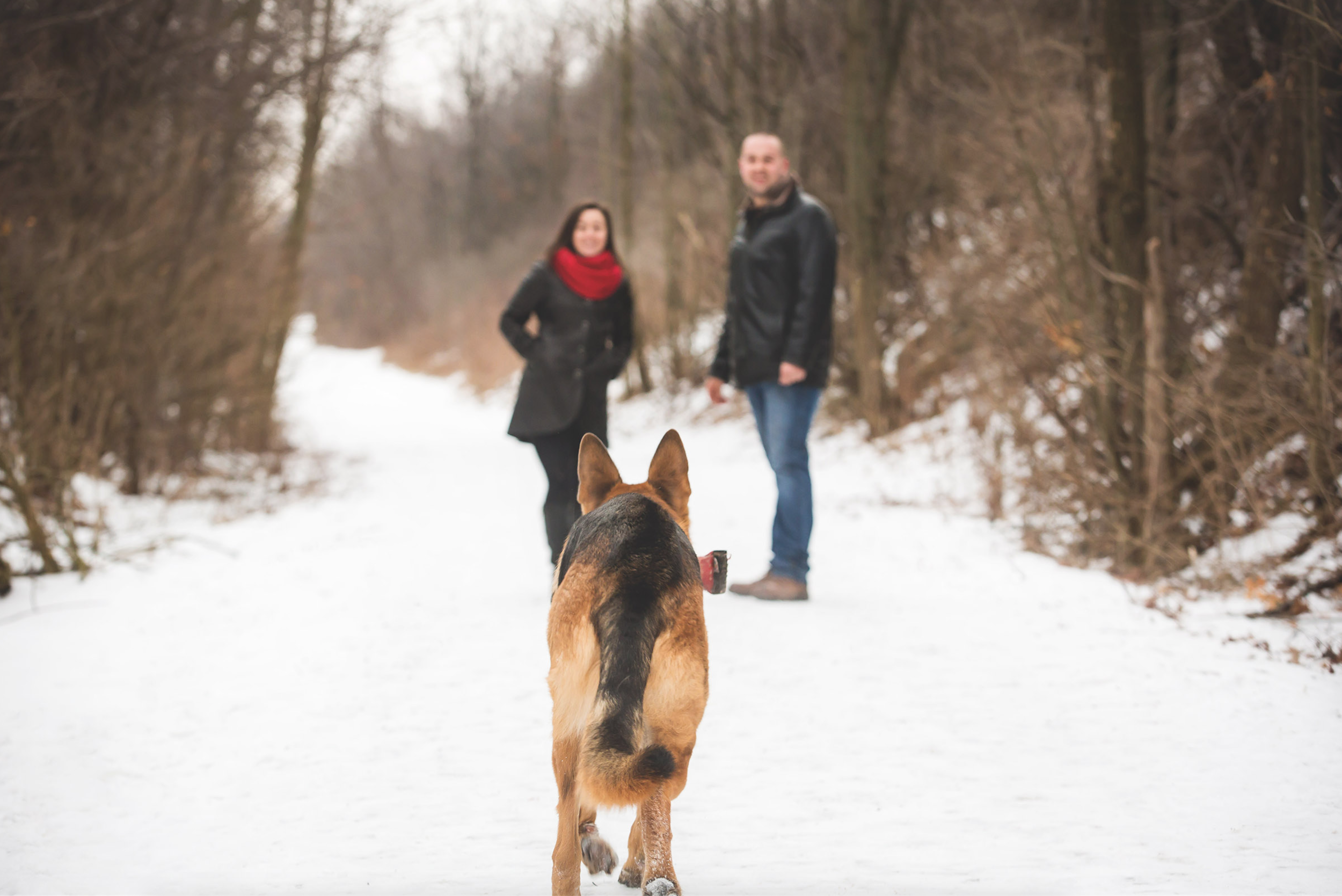 Engagement-Photos-Hamilton-Niagara-Toronto-Burlington-Oakville-Photographer-Engaged-Ring-Photography-Dog-Winter-Moments-by-Lauren-Image-4.png