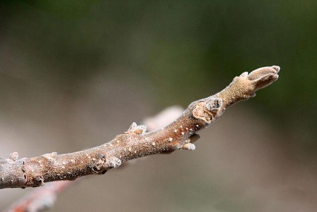 Twig Image.jpg