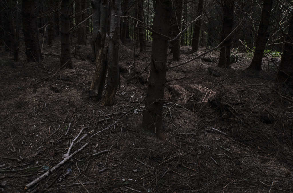 Deep WoodsVI.jpg