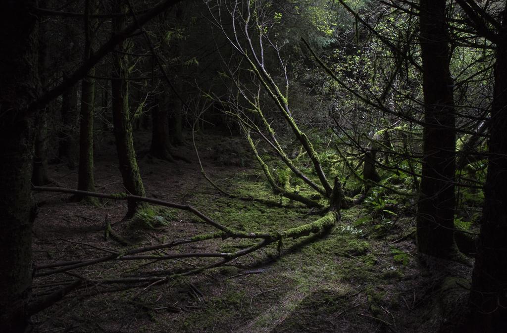 Deep Woods_II.jpg