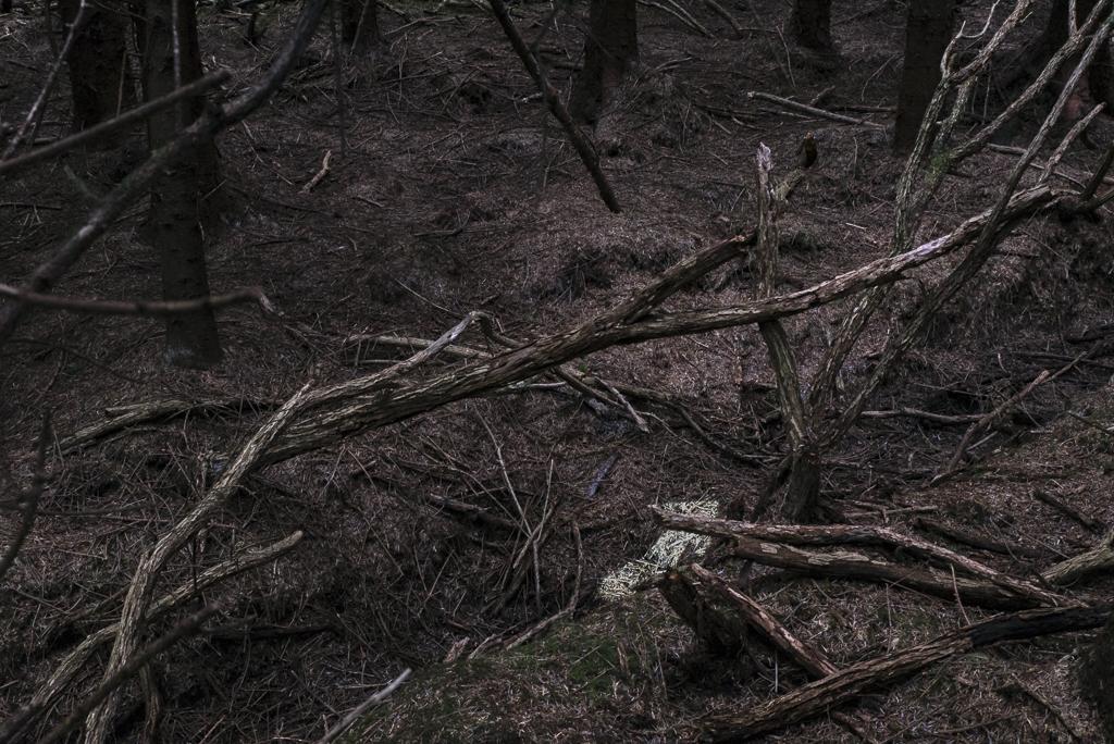 Deep Woods_IX_1.jpg