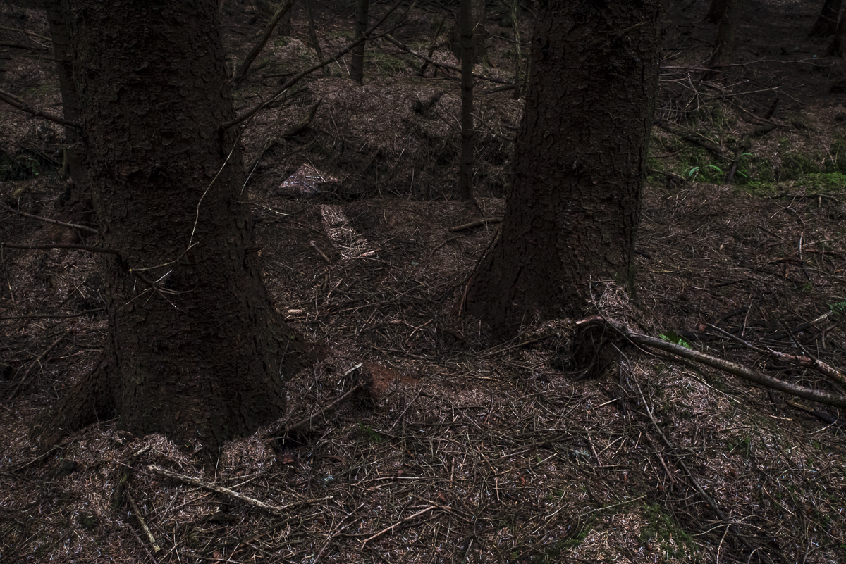 Deep Woods V_2.jpg