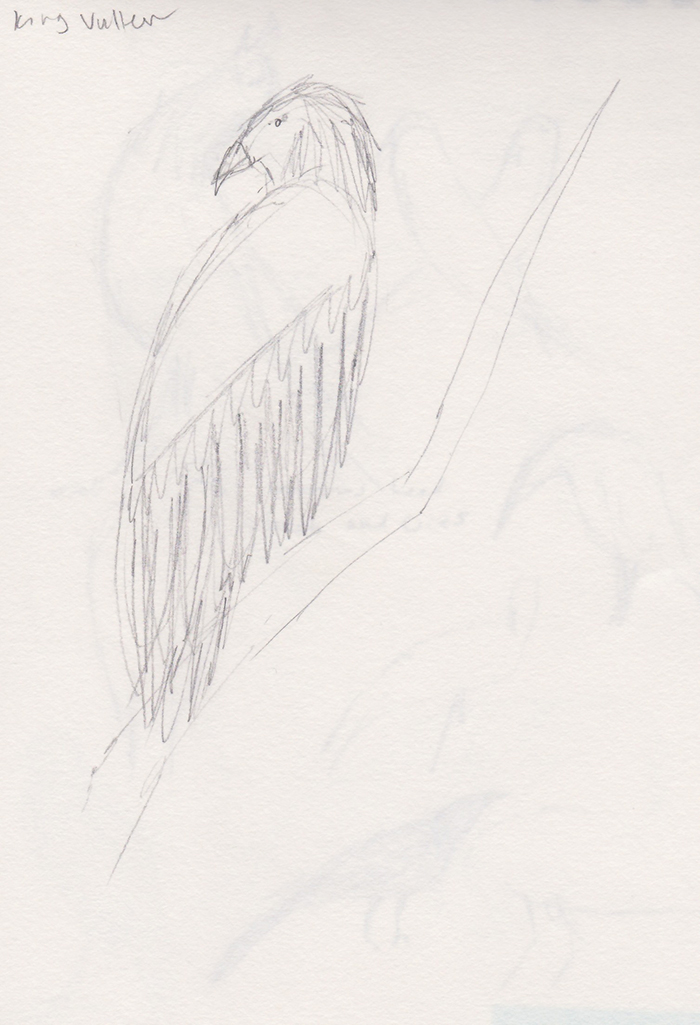 king-vulture-formatted.jpg
