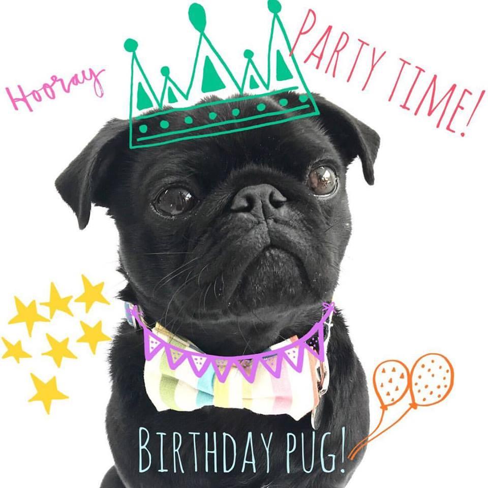 Percy Birthday