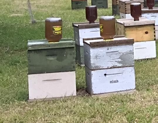 Hives with top feeders