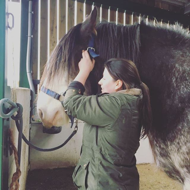 Had a lovely afternoon treating the Clydesdale team at @handsonheavyhorses16 on Friday. Despite their size these boys were absolute angels to treat, and definitely enjoyed their session! 😇 #gentlegiants #heavyhorses #equinephysio #maintenanceiskey
