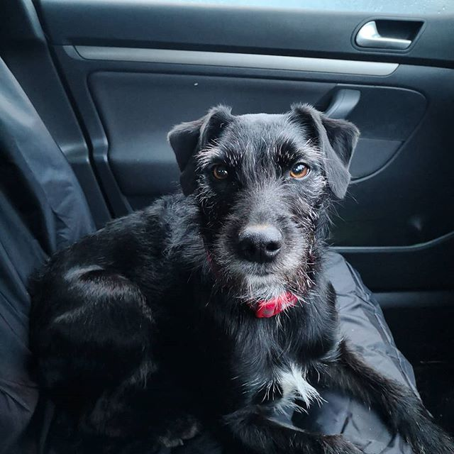 🦴Got some company in the car today 🐾 #teammascot #dogsofinstagram #darceydog