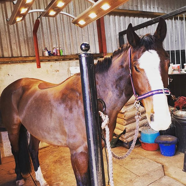 Lucky physio's get to work under the heat lamps on rainy days ☔ 🤗 #spoilt #princesspony #goawayrain #equinephysiotherapy