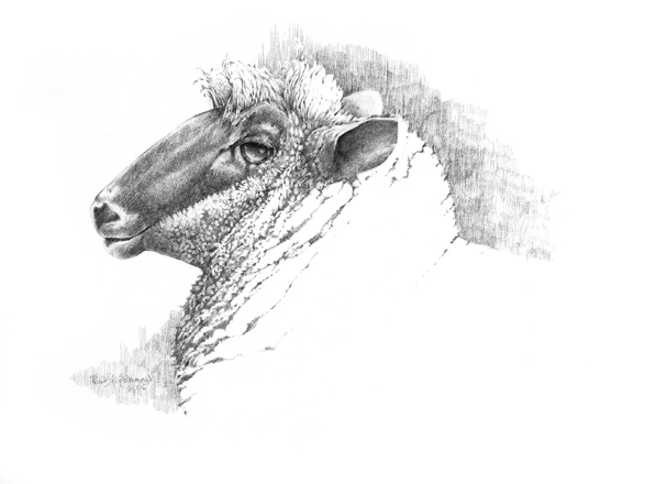 Sheep Thoughts