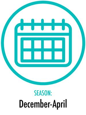Season December to April
